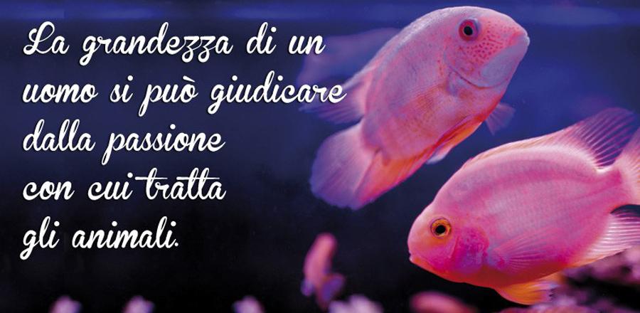 Pesci Acquario Animali Zoomiguana Casoria Marcianise Napoli Caserta Avellino Salerno Napoli1