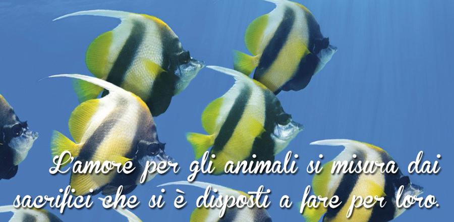 Pesci Acquario Animali Zoomiguana Casoria Marcianise Napoli Caserta Avellino Salerno Napoli4