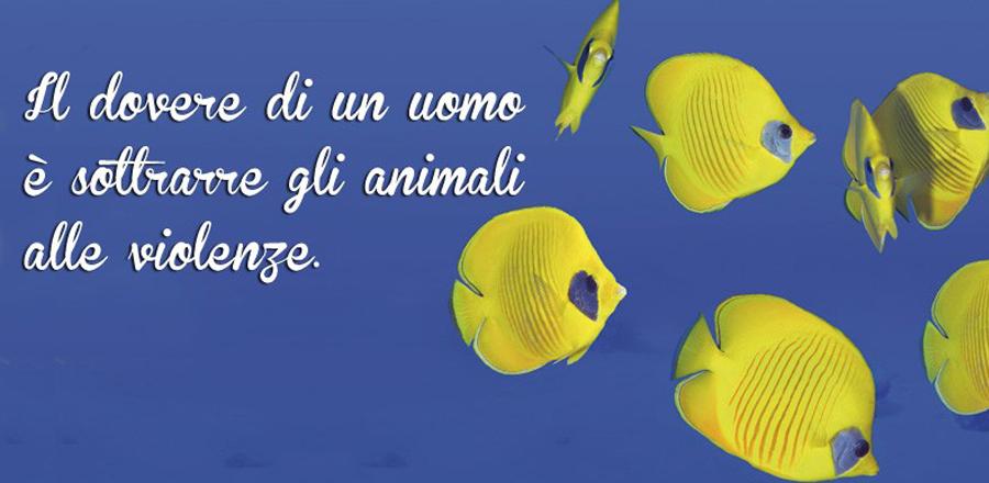 Pesci Acquario Animali Zoomiguana Casoria Marcianise Napoli Caserta Avellino Salerno Napoli6