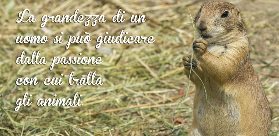 Slide Roditori Piccoli Animali Domestici Napoli Caserta Avellino Salerno Campania Zoomiguna Casoria Marcianise1