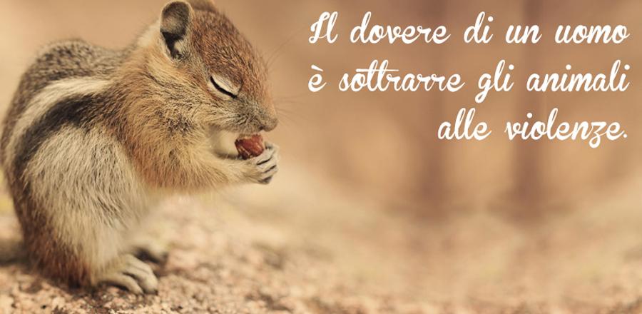 Slide Roditori Piccoli Animali Domestici Napoli Caserta Avellino Salerno Campania Zoomiguna Casoria Marcianise2