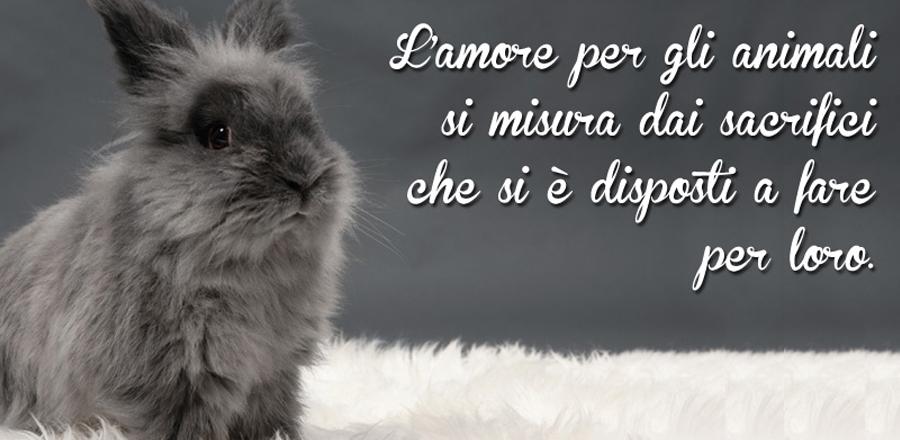 Slide Roditori Piccoli Animali Domestici Napoli Caserta Avellino Salerno Campania Zoomiguna Casoria Marcianise3