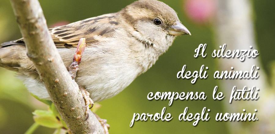 Volatili Uccelli Pappagallo Canarini Animali Zoomiguana Casoria Marcianise Napoli Caserta Avellino Salerno Napoli1