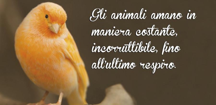 Volatili Uccelli Pappagallo Canarini Animali Zoomiguana Casoria Marcianise Napoli Caserta Avellino Salerno Napoli2