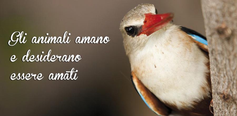 Volatili Uccelli Pappagallo Canarini Animali Zoomiguana Casoria Marcianise Napoli Caserta Avellino Salerno Napoli3