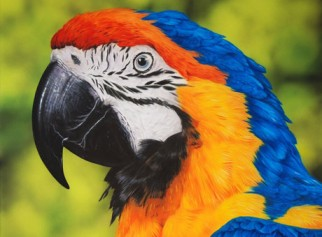 Volatili Uccelli Pappagallo Canarini Animali Zoomiguana Casoria Marcianise Napoli Caserta Avellino Salerno Napoli6