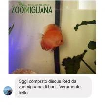 testimonianza-discus-facebook